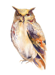 Owl bird watercolor painting hand made isolated on white backgro