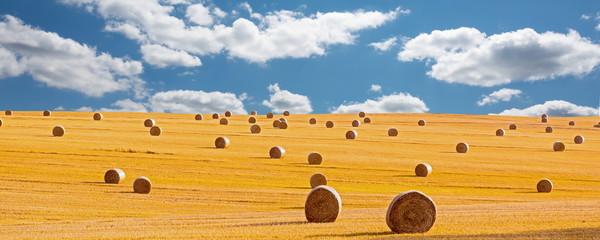 Erntezeit, Strohrollen, Getreidefeld Fotoväggar