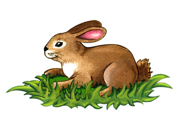 Rabbit watercolor illustration sitting on green grass isolated on white. Cute Easter bunny clip art.