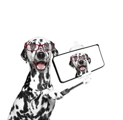 dog photographed selfie on the phone