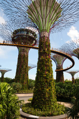 Singapore - March,2016.Supertrees in Gardens by the Bay in Singa