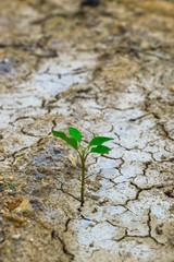 ひび割れた大地から芽が出ている様子