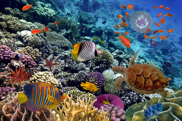 Deurstickers Onder water Colorful coral reef with many fishes and sea turtle