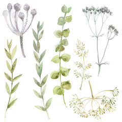 A set of herbs and flowers hand-painted watercolor. Botanical drawings. Flowers on a white background.