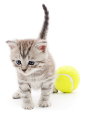 Wall Mural - Kitten Playing with Ball