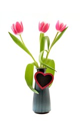 Tulips in vase, with heart for text, on the white background.