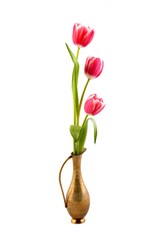 Tulips in vase on the white background.