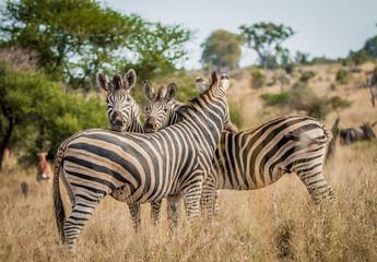 Bonding Zebras