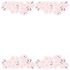 sakura frame