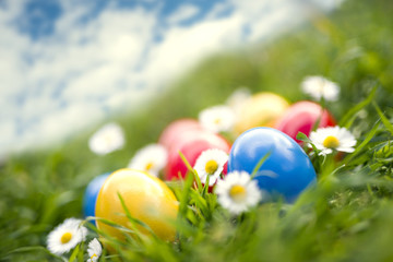 Easter eggs on grass arranged with daises