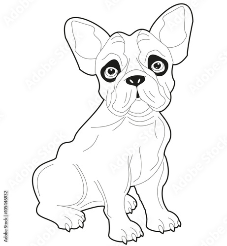 Black And White French Bulldog Vector Bulldog Francese In Bianco E