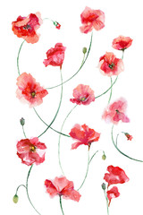 Watercolor painting. Red flowers on a white background. Poppies pattern.
