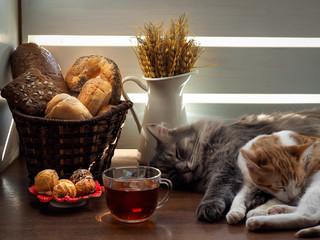 Comfortably sleeping cat and kitten on a table in the sun. Bouquet with ears of wheat in a jug. Different bread in a basket, sweet pastries and tea. Tasty food. Concept - home comfort, lifestyle