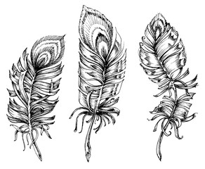 Peacock feathers artistic drawing