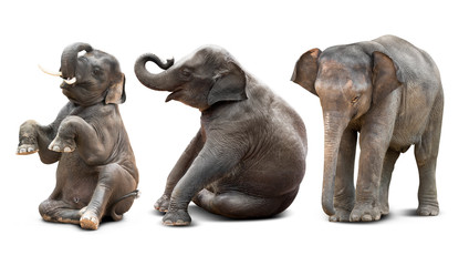 Baby elephant isolated Wall mural