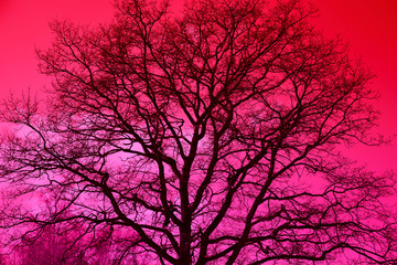tree silhouette against a bright red sky