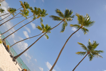 Palm trees on the beach in the Dominican Republic
