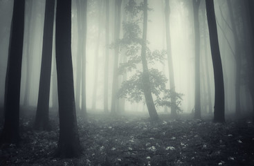 tree silhouette in foggy forest