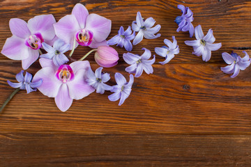 spring flowers on a wooden background