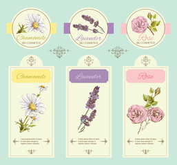 Vector vintage banners with wild flowers and medicinal herbs. Design for cosmetics, store, beauty salon, natural , organic health care products.