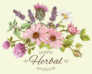 Vector vintage hand drawn composition with wild flowers and herbs. Design for cosmetics, store, beauty salon, herbal tea, natural and organic products. Can be used like a greeting card.