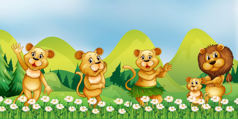 Lion family in the flower field