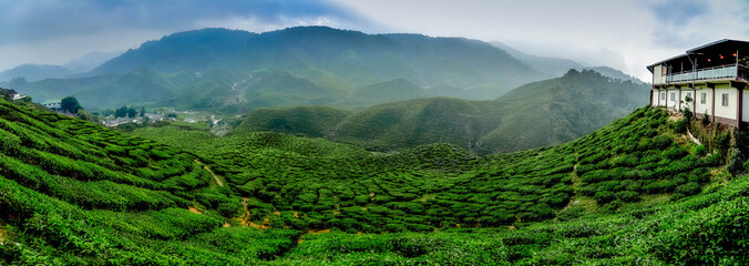 wide view the beautiful tea plantation at Cameron Highland, Malaysia. Hill curve and slope with fog, cloudy sky with cropped image restaurant. Wall mural