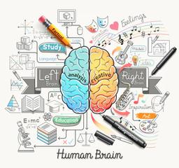 Human brain diagram doodles icons style.