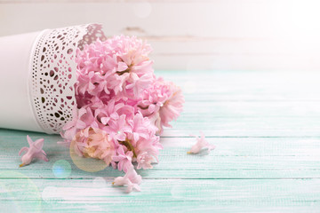 Fresh pink hyacinths flowers on turquoise painted wooden backgro