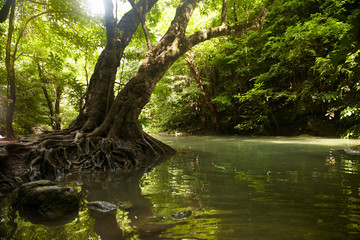 Tree with roots on the banks of the tropical river