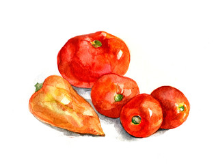 Tomatoes and pepper, watercolor, realism