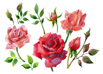 Set of isolated elements of red roses