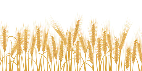 Ears of wheat horizontal border seamless pattern
