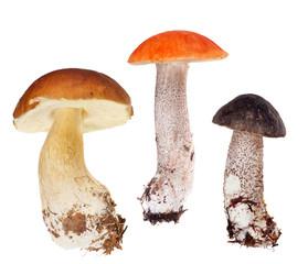 set of three edible mushrooms isolated on white