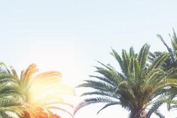palm tree on blue