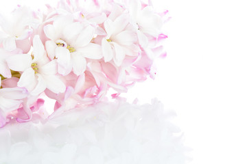 Pastel pink hyacinth background