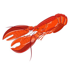 Lobster sea food illustration