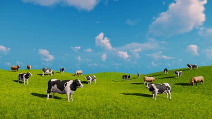 Wall Mural - Herd of mottled cows graze on the open green meadows at spring day. Static shot. Realistic three dimensional animation.
