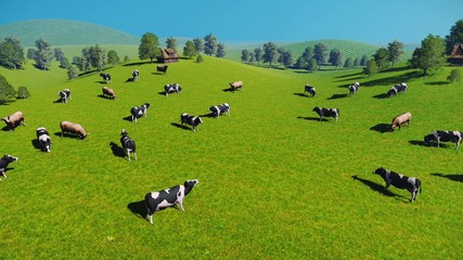 Wall Mural - Herd of cows graze on the green meadows nearby from the rustic house at spring day. Aerial view, sliding forward shot. Realistic 3D animation.