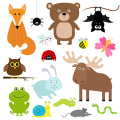 Forest animal insect set. Bear, hare, fox, moose, owl, bat, spider, ladybug, bee, butterfly, frog, snail, caterpillar, worm, mouse. Kids education cards. White background. Isolated. Flat design.