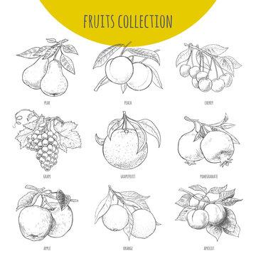 Fruits set vector freehand pencil drawn sketch illustration