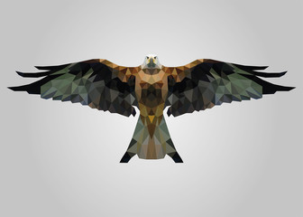 Eagle bird flying free with wide open wings and looking vector