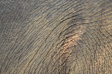 Abstract Elephant skin and furs for background