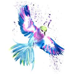Magic tropical bird Colibri
