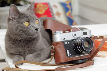 Cat photographer or waiting for better shot/background with a cat that lies next to the old camera