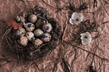 Nest with Easter quail eggs on craft paper background