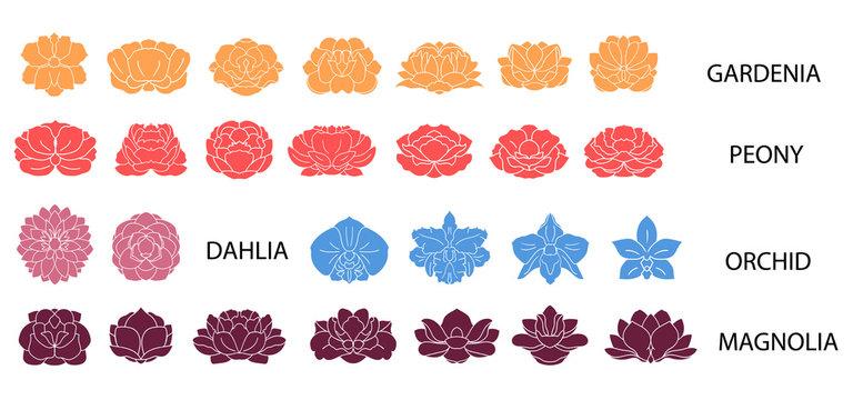 Dahlia, magnolia, orchid, gardenia, peony flower colorful collec