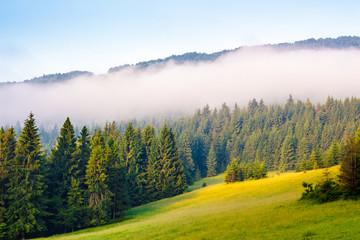 morning mist over the forest on hillside