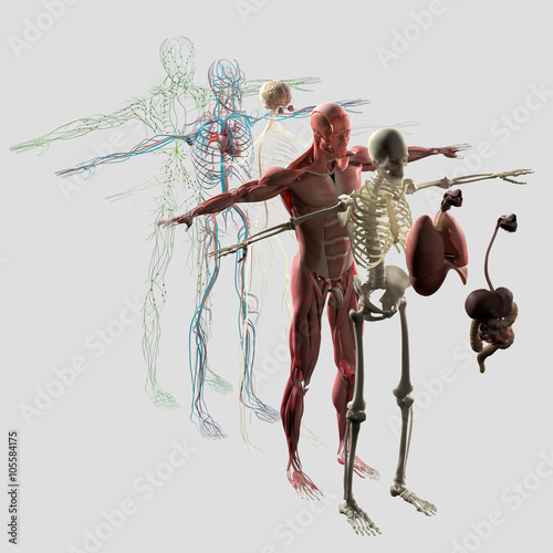 Human Anatomy Exploded View Deconstructed Separate Elements Muscle