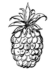 Pineapple sketch hand drawn